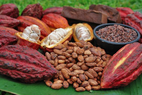 - Los granos de cacao Theobroma cac...