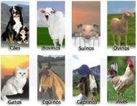 Productos veterinarios -