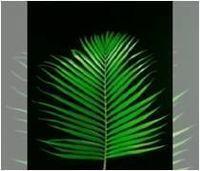 Corte del follaje tropical fresca -
