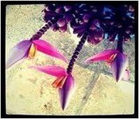 Las flores tropicales frescas -