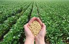 GMO SOJA