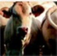 Nutrición animal -