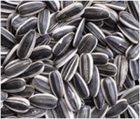 Semillas de girasol -