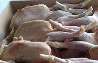 Halal Certificar congelado Pollo entero -